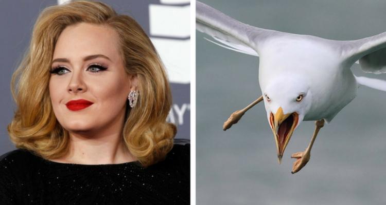 Adele fobia