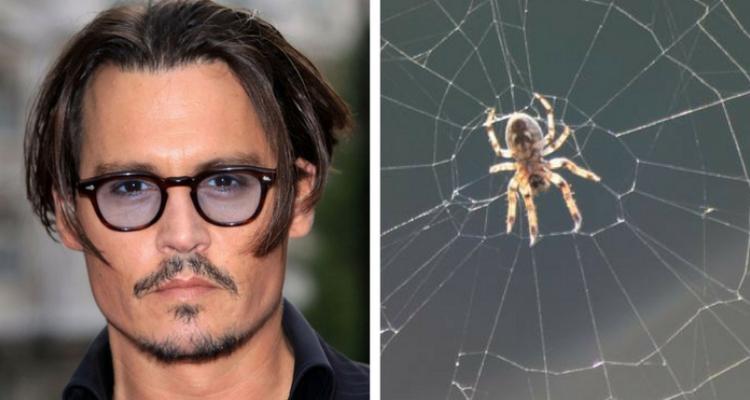 Johnny Depp aracnofobia