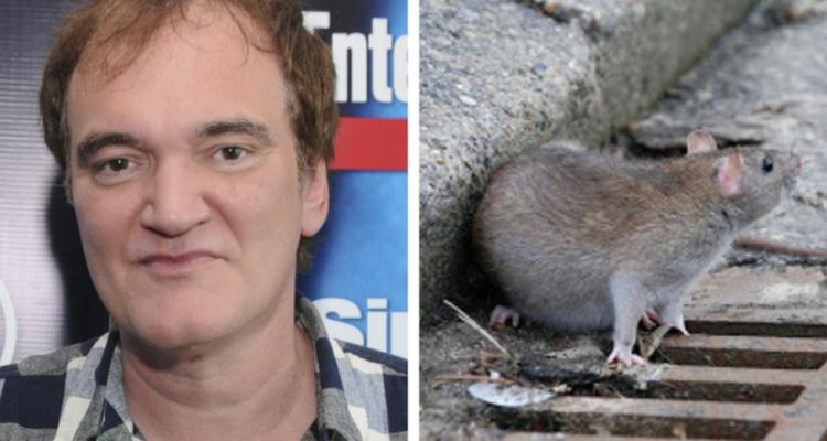 Quentin Tarantino medo de ratos