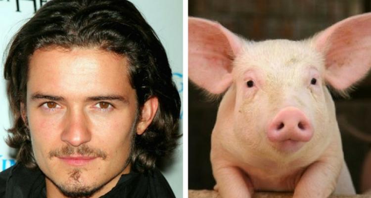 Orlando Bloom fobia de porco